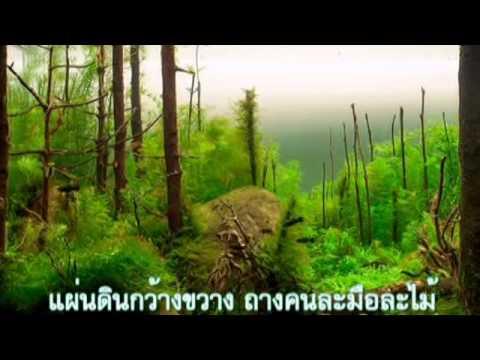 คอร์ดเพลง ป่าลั่น สุเทพ วงศ์กำแหง