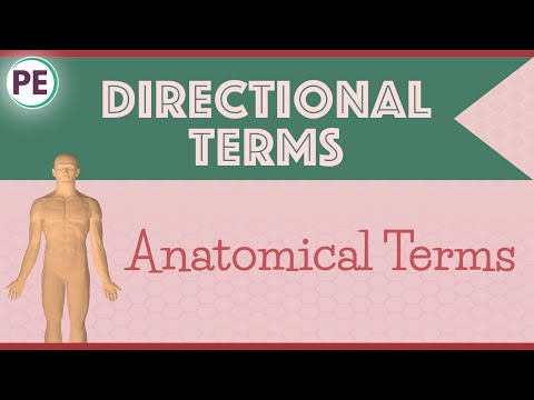 Anatomical Terms: Directional Terms (Anatomy)
