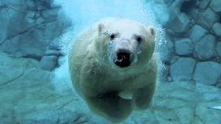 unknown ice age marc pin ol edit