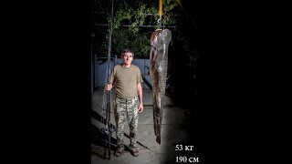 обзор шнура для рыбалки на сома