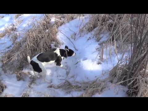 Bridger Goes Hunting