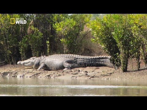 National Geographic Documentary - Monster Crocodile [New Documentary HD 2017]