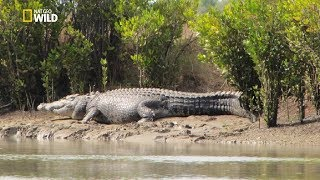 National Geographic Documentary - Monster Crocodile [New Documentary HD 2017]