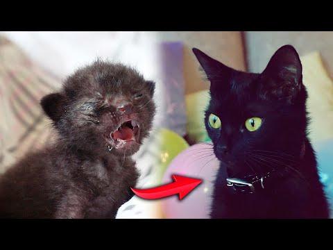 Спасение новорожденного котенка. Большой праздничный выпуск / SANI Vlog