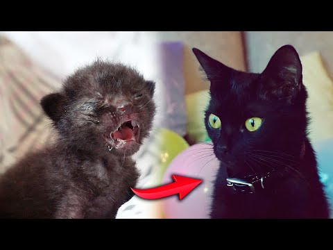 Saving the newborn. Big series / SANI vlog