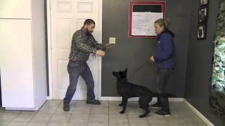 Malinois Puppy Training Lesson Fourteen