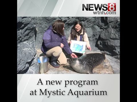 Wendy - Painting With Seals At Mystic Aquarium Starts In May!