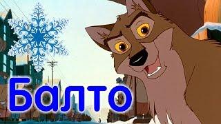Собаки, ставшие легендой: сибирский хаски Балто (hasky Balto)