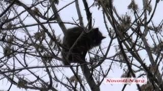 Видео Новости-N: В Николаеве 3 дня кот сидит на дереве