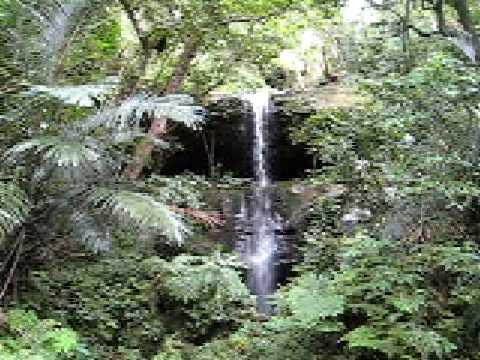 西表島はまさに熱帯雨林。小さな滝もいっぱいあります