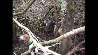 Hot Pursuit Bear Hunting