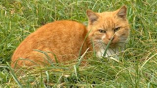 National Feral Cat Day - October 16