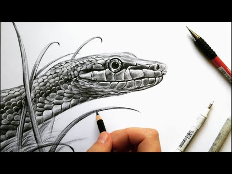 Snake 🐍 drawing for beginners, very easy and simple ...