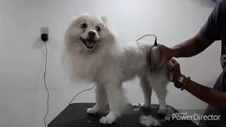 寵物美容教學-10分鐘快速剃毛教學