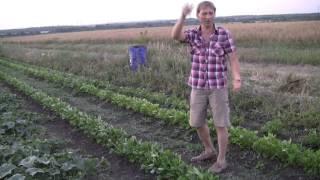 видео Как растет арахис