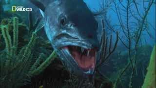 Самые опасные животные  Морской мир (HD720p)