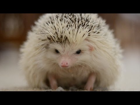 Life From a Hedgehog's Eyes