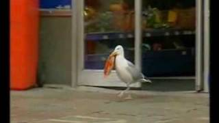 Sam the seagull stealing Doritos