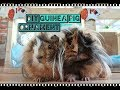 Süs Guinea Pig Yapımı | DIY Guinea Pig Ornament