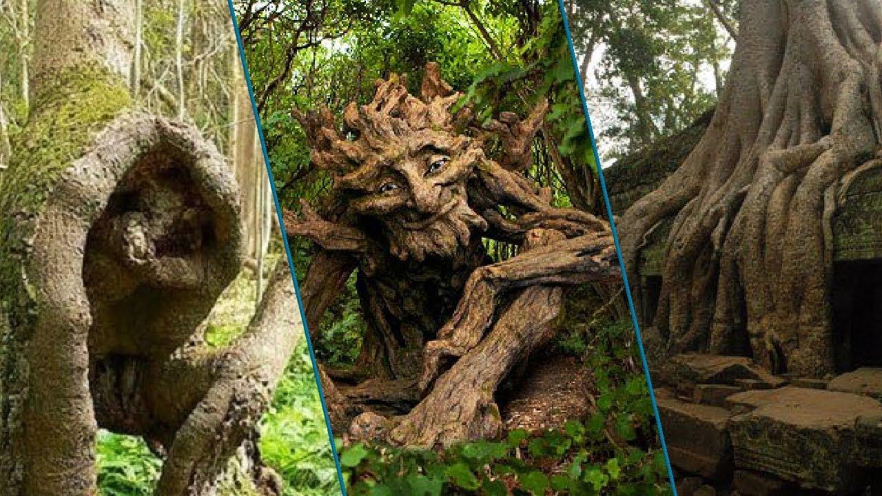 Top 20 Strange Trees Around The World