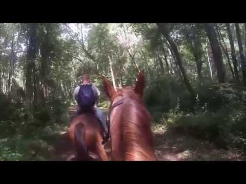 Trail ride at Codorus state park