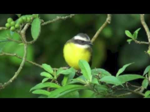 Birds of Paradise - Georgia Kelly
