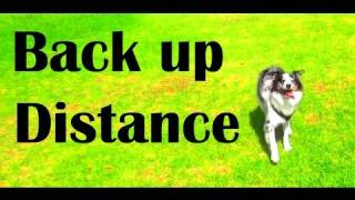 Tips for backing up- ¢licker dog training tricks