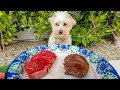 DO PUPPIES PREFER RAW MEAT OR COOKED MEAT??