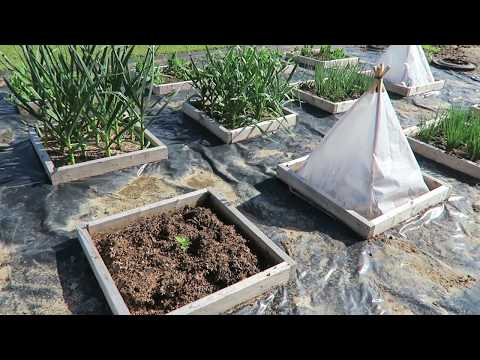 A Solar Pyramid Tomato Test: This Agrarian Life Episode #47