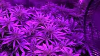1500w LED Grow update