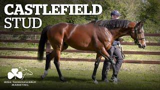 ITM Irish Stallion Showcase 2021 - Castlefield Stud
