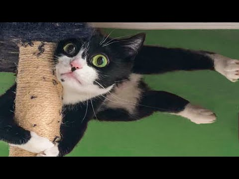 🤣 Funniest😻 Cats and 🐶 Dogs - Awesome Funny Pet Animals 😛
