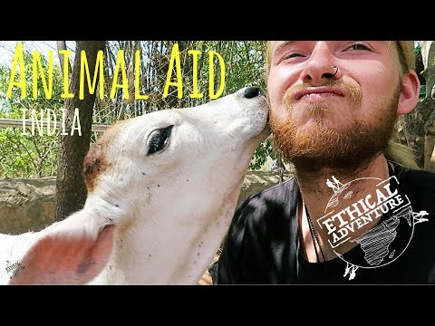 Volunteering at Animal Aid | Udaipur | India Travel Vlog
