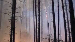 пожар в лесу лесничества.mpg