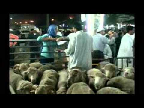 Cruel live-sheep trade to Saudi Arabia