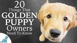Golden Retriever Puppy First Week Home - Professional Dog Training Tips