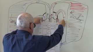 Cardiovascular System 7, Circulation of the blood