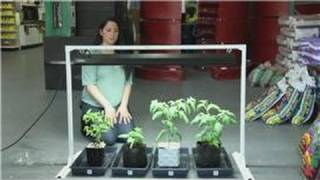 Tomatoes And Indoor Vegetable Gardens : Easy Ways To Grow Vegetables In An Apartment