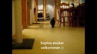 Video fra Dyrebeskyttelsen Bergen 2013