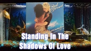 Standing In The Shadows Of Love   Rod Stewart   Blondes Have More Fun   9
