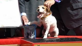 "Uggie, the dog who starred in the Academy Award-winning film ""The A..."