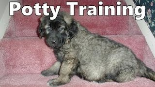 How To Potty Train A Sarplaninac Puppy - Illyrian Sheepdog House Training Tips - Sarplaninac Puppies