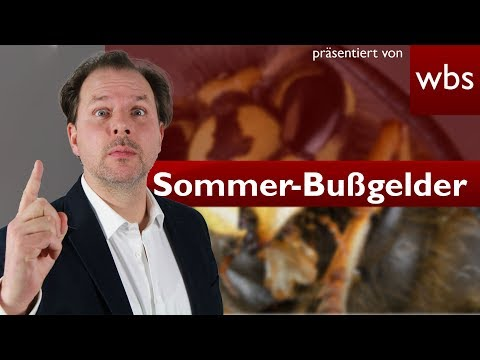 Wespen töten kann 65.000 Euro kosten - Kuriose Sommer-Bußgelder | Rechtsanwalt Christian Solmecke