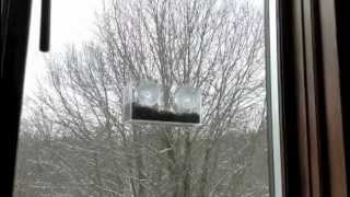 Squirrel Proof Window Bird Feeders - 10 Minutes Of Action 6 Feet From My Desk!