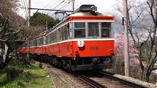 【4K 60P】箱根登山鉄道 モハ1形サンナナ+109 荏原踏切枝垂桜 20190331