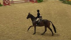 Video of VANESSA MCCAUGHLEY ridden by VANESSA MCCAUGHLEY from ShowNet!