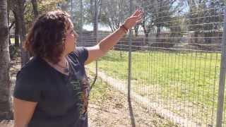 Big Cat Cages