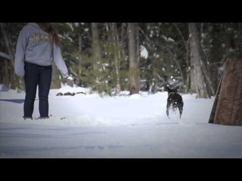 Dog loves Maine's snow!