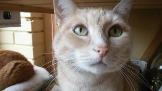 Коты Марсик и Маська на балконе. Июнь 2016