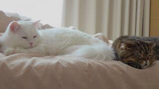 아침마다-침대로-고양이들이-몰려들어요